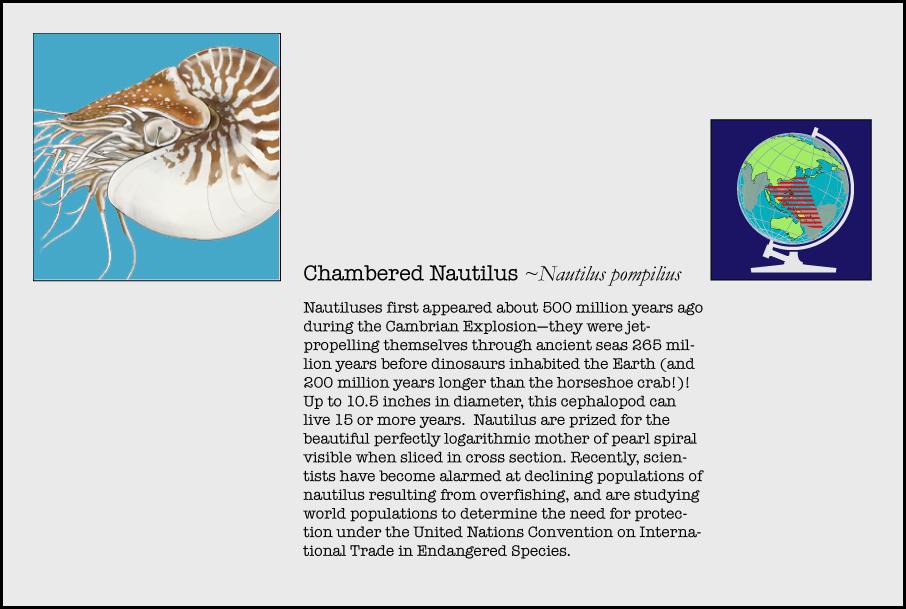 info-nautilus.jpg