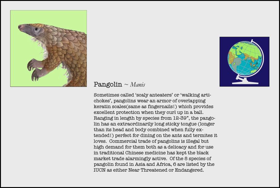 info-pangolin.jpg