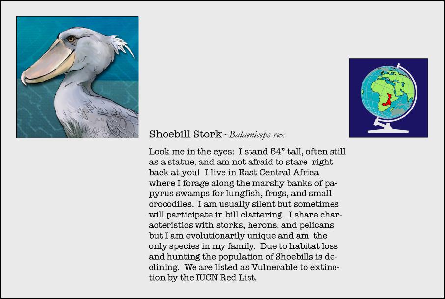 info-shoebill-stork.jpg