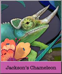 jackson-s-chameleon.jpg