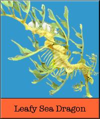 leafy-sea.jpg