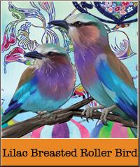 lilac-breasted-roller-bird.jpg