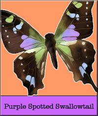 purple-spotted.jpg