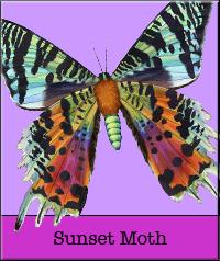 sunset-moth.jpg
