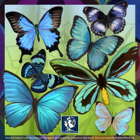 Blue Butterfly Wall Decals, life sized!