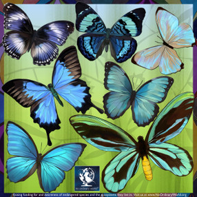 Blue Butterfly wall decals
