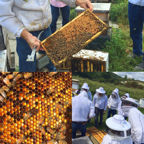 Spring Beekeeping Endeavors - April 8, 2017 - Sold Out