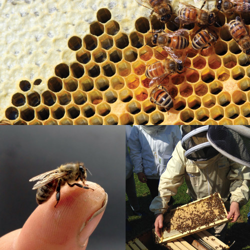 Beekeeping Fundamentals - January 6, 2018