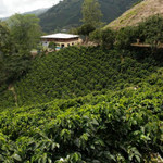 Colombia - Santa Barbara Estate, 1lb