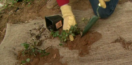 598-aty-how-to-plant-ground-cover-to-prevent-erosion-2.jpg