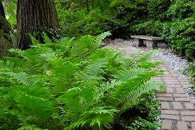 Image result for christmas fern in landscaping