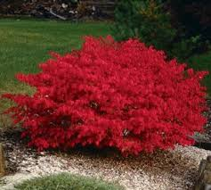 Image result for burning bush