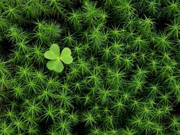 Image result for irish mosses