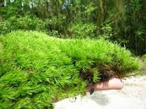 Image result for mood moss