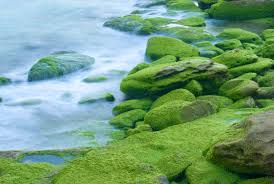 Image result for moss covered rocks