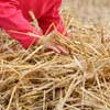 hay-stack-game-thumbnail.jpg