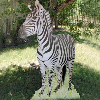 zebra-cardboard-standup.jpg