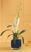 Irresistible Orchid Planter
