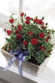Village Rose Basket