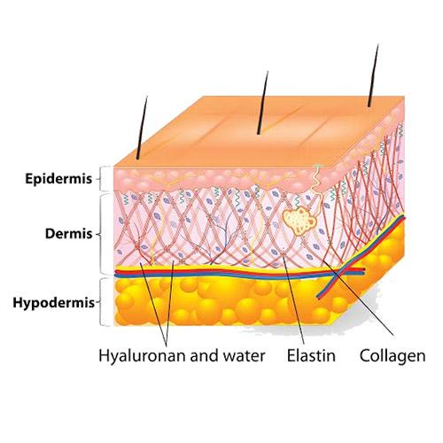 skin-layers.jpg