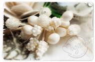 Magnolia Stamps VINTAGE BERRIES CREAMY