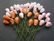 Tulip2 - Mixed Peach/Orange Tone