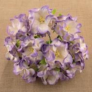 3.5cm Gardenia - 2-Tone Lilac