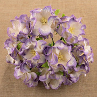6cm Gardenia - 2-Tone Lilac