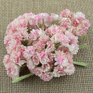 Wild Orchid Crafts 2-Tone Baby/Ivory Gypsophila paper flowers
