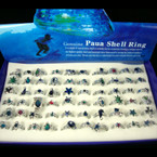 Genuine Paua Shell Rings 60 pc display bx .40 EA