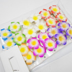 "2.5"" Hawaiian Flower on Gator Clip 12-2 pks per bx .54 per set"