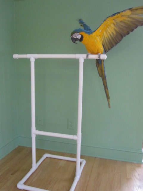 Parrot Stands Bird Toys Etc