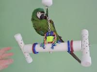 BIRD BONE ( Rattles)