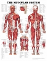 Human Histology, Health and Anatomy