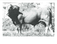 Polled Express