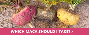 Where to buy maca