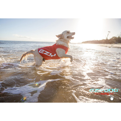 Perfect for beach dogs