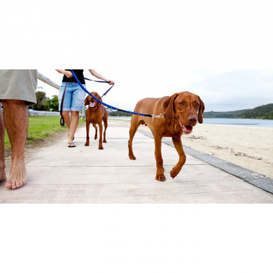 Bo and Turk taking a walk on the beach!