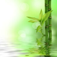 Fresh Bamboo (Type) Fragrance Oil