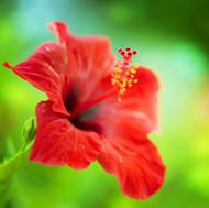 Paradise Garden Fragrance Oil