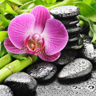 Bamboo & Orchid Fragrance Oil