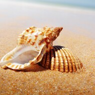 Golden Sands (Type) Fragrance Oil