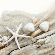 Beach Wood Fragrance Oil
