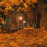 Autumn Night (Type) Fragrance Oil