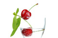 Sour Cherry - Amarena Natural Flavor