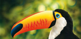 Harder & Steenbeck  - Toucan Wildlife Stencil