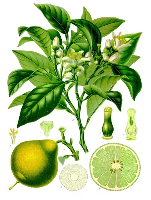 Bergamot Essential Oil, 5 mL