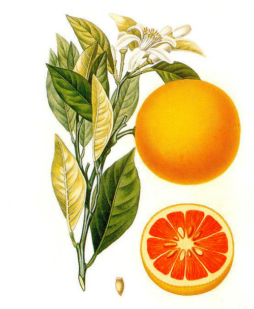 Blood Orange Essential Oil, 5 mL