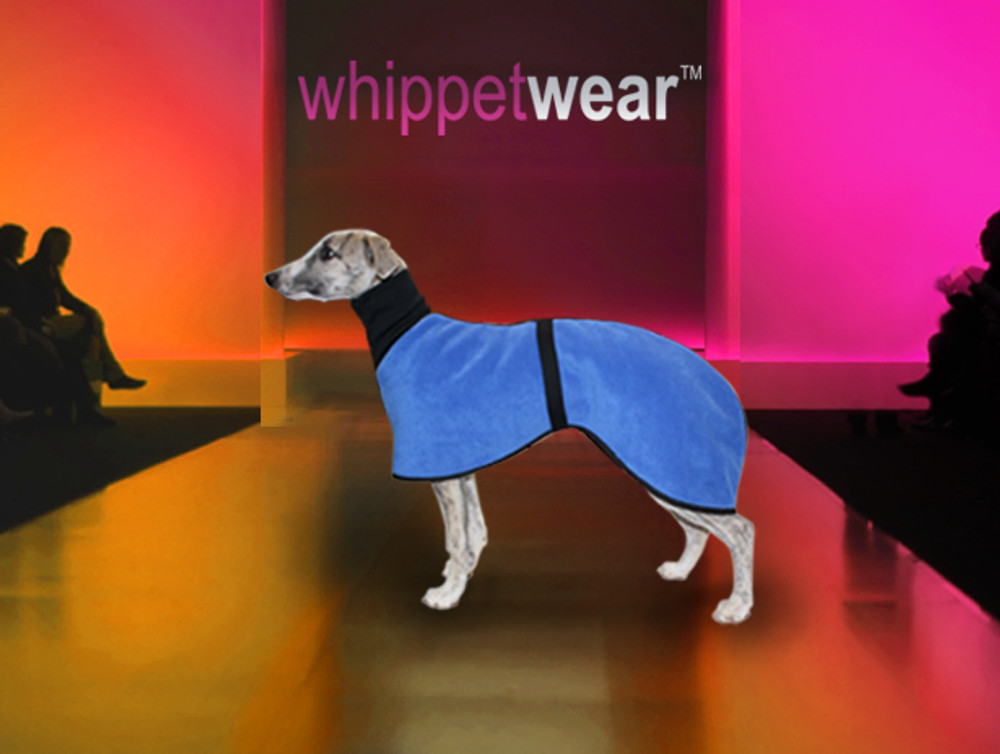 Whippet Coat Puppy