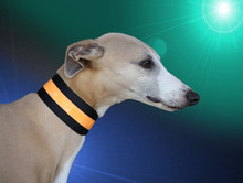 beseen citrus reflective collar 2